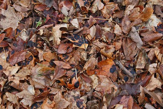 20121109-brown_leaves.jpg