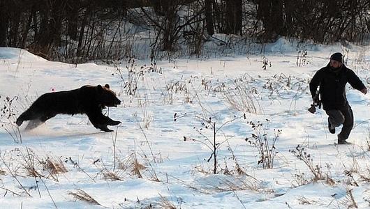 20130128-bear_attack_01.jpg