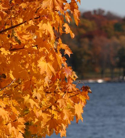 20091026-Leaves and lake.JPG